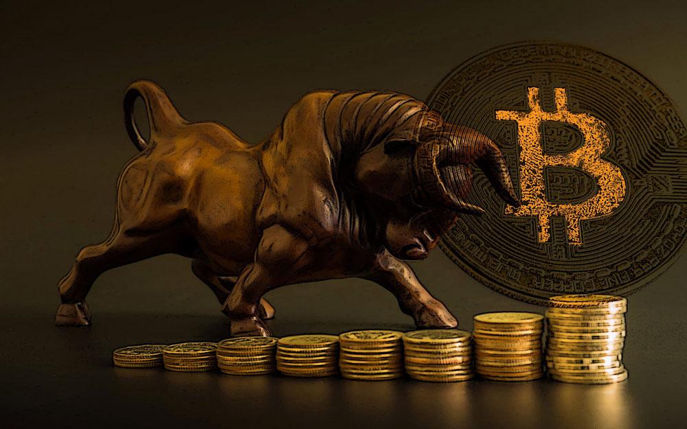 Bitcoin qiwi išmokėjimo adresas